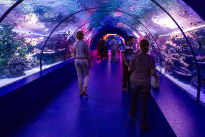 Океанариум antalya aquarium