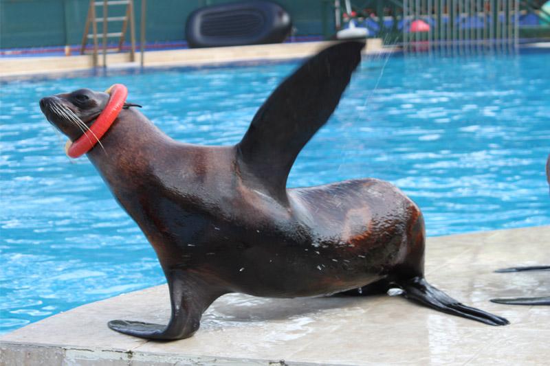 Дельфинарий Кемера – Арриво